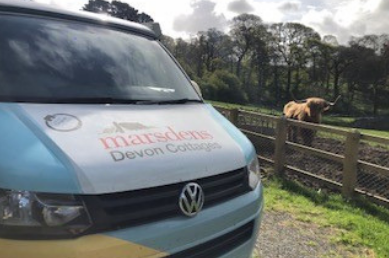 Devon Xplorer next to Highland Cattle