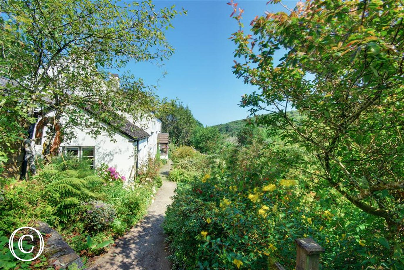 This delightful semi-detached character cottage is set within a canopy of ancient trees with an abundance of ferns and wild flowers