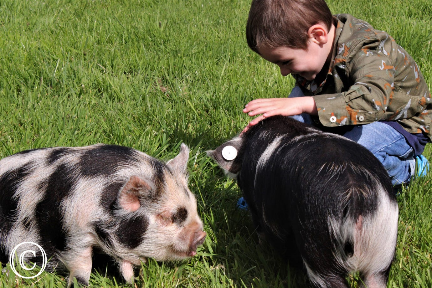 Piglets at Well Farm Cottages