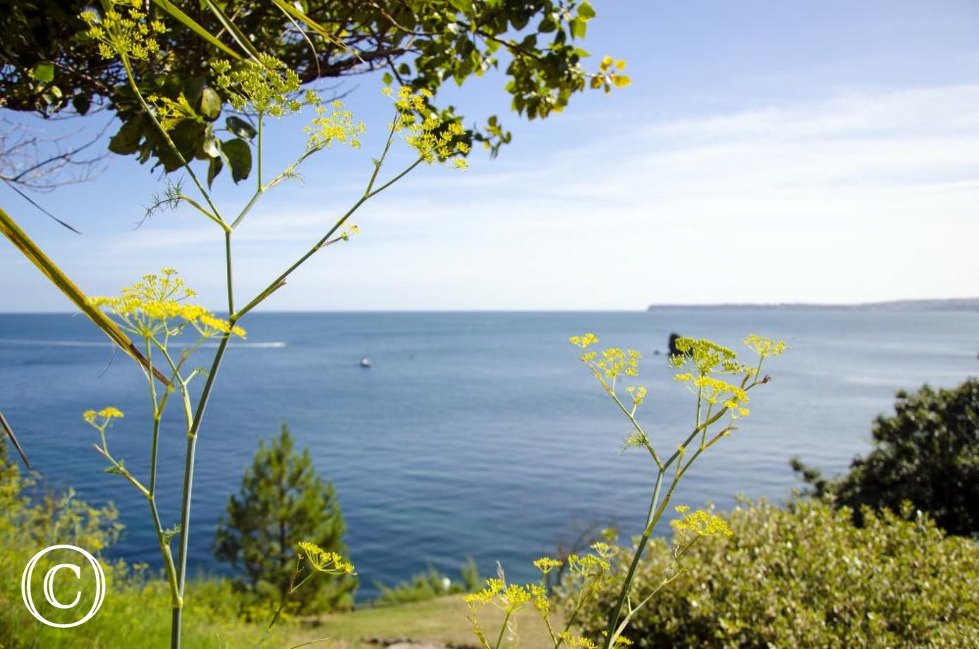 Meadfoot Beach Apartment, Torquay - View across Torbay